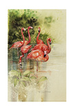 Flamingo Paper Giclee Print by Tim Knepp