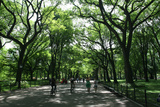 Central Park Mall Summer Photographic Print by Robert Goldwitz