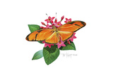 Julia Butterfly Giclee Print by Tim Knepp