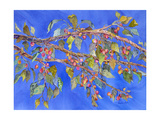 Crab Apple III Giclee Print by Sharon Pitts