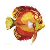 Fish 3 Red-Yellow Reproduction procédé giclée par Olga And Alexey Drozdov