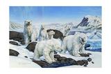 Polar Bears Giclee Print by Tim Knepp