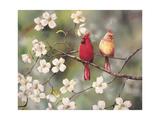 Cardinals Giclee Print by Sarah Davis
