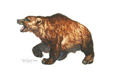 Cave Bear Giclee Print by Tim Knepp