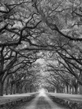 Oaks Avenue 2 BW Photographic Print by Moises Levy