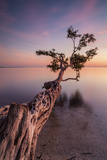 Water Tree IV Photographic Print by Moises Levy