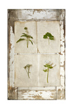 Botanical Board 1 Giclee Print by  Symposium Design