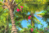 Key West Pink Flowers Palm Photographic Print by Robert Goldwitz