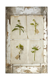 Botanical Board 2 Giclee Print by  Symposium Design