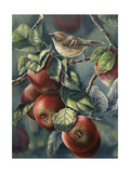 Apples and Ruby Crown Giclee Print by Wanda Mumm