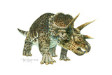 Triceratops Giclee Print by Tim Knepp