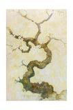 Dogwood Giclee Print by Tim Knepp