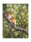 Tiger Giclee Print by Sarah Davis