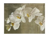 Painted Orchid Giclee Print by  Symposium Design