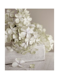 White Flowers Giclee Print by  Symposium Design