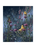 Wings of Gold Giclee Print by Wanda Mumm