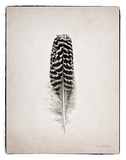 Feather I BW Poster by Debra Van Swearingen