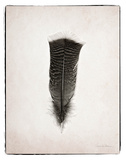 Feather III BW Poster von Debra Van Swearingen
