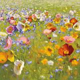 Champ de Fleur I Poster by Shirley Novak