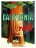 California Redwoods - TWA (Trans World Airlines) ポスター : デイヴィッド・クライン