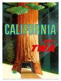 California Redwoods - TWA (Trans World Airlines) Print by David Klein