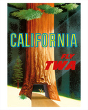 David Klein - California Redwoods - TWA (Trans World Airlines) - Giclee Baskı