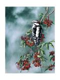 Woodpecker with Red Berries Giclee Print by Wanda Mumm