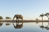 Botswana, Chobe NP, African Elephant at Water Hole in Savuti Marsh Photographic Print by Paul Souders