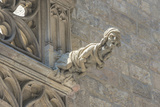 Spain, Barcelona, Stone Carving, Gargoyle Photographic Print by Jim Engelbrecht