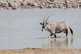 Namibia, Etosha National Park. Oryx Wading in Waterhole Photographic Print by Wendy Kaveney