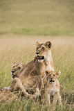 Kenya, Maasai Mara, Mara Triangle, Mara River Basin, Lioness with Cubs Photographic Print by Alison Jones