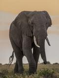 East Kenya, Amboseli National Park, Elephant (Loxodanta Africana) Photographic Print by Alison Jones