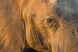 Botswana, Chobe NP, Elephant Standing Along Chobe River at Sunset Photographic Print by Paul Souders