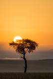 Kenya, Maasai Mara, Sunrise Behind Balanites Tree and Hot Air Balloon Photographic Print by Alison Jones