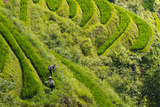 Farmers on the Rice Terrace, Longsheng, Guangxi Province, China Photographic Print by Keren Su