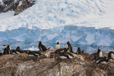 Lemaire Channel, Antarctica. Gentoo Penguin Colony Photographic Print by Janet Muir