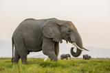 Kenya, Amboseli National Park, Elephant Photographic Print by Alison Jones