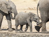Namibia, Etosha NP. Baby Elephant Walking Between Two Adults Photographic Print by Wendy Kaveney