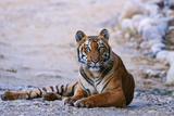 Royal Bengal Tiger by the Ramganga River, Corbett NP, India Photographic Print by Jagdeep Rajput