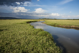 Kenya, Maasai Mara, Mara Triangle, Wetland Called 'Governor's Swamp' Photographic Print by Alison Jones