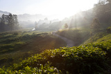 Tea Plantations and Road, Munnar, Western Ghats, Kerala, South India Fotodruck von Peter Adams