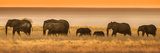 Etosha NP, Namibia, Africa. Elephants Walk in a Line at Sunset Fotografie-Druck von Janet Muir