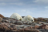 Canada, Nunavut, Repulse Bay, Two Polar Bears Resting Along a Ridge Photographic Print by Paul Souders