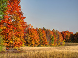 USA, Michigan, Upper Peninsula. Fall Colors in Hiawatha NF Photographic Print by Julie Eggers