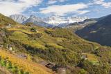 Vineyards Near Bolzano, Trentino-Alto Adige, Suedtirol, Italy Photographic Print by Peter Adams