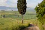 Track, San Quirico d'Orcia, Val d'Orcia, Tuscany, Italy Photographic Print by Peter Adams