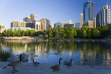 Canada Geese Resting at a Lake with Skyline, Calgary, Alberta, Canada Photographic Print by Peter Adams