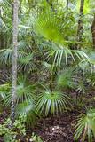 Tropical Rainforest, Playa del Carmen, Riviera Maya, Yucatan, Mexico Photographic Print by Charles O. Cecil