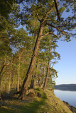 Canada, B.C., Gulf Islands, Wallace Island. Fir Trees Along the Path Photographic Print by Kevin Oke