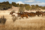 Herd of Horses Running on Dry Grassland and Brush Photographic Print by Sheila Haddad